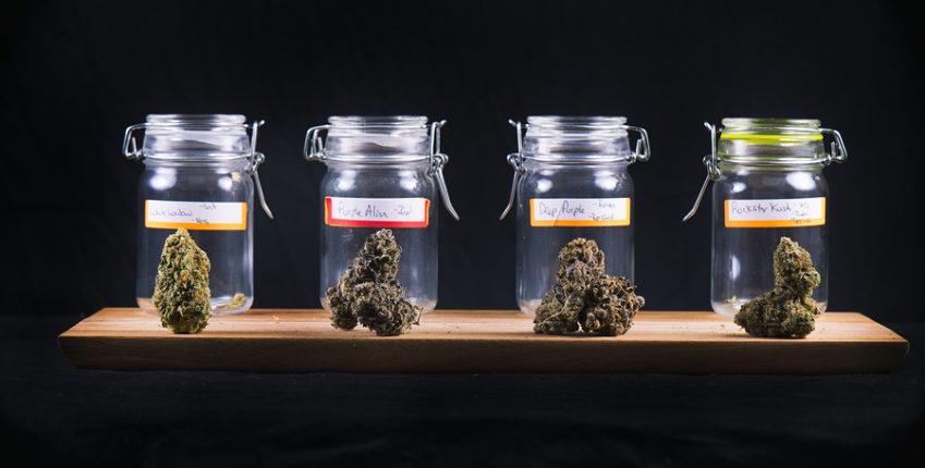 Is Marijuana Legal in Boynton Beach And Should I Go To Rehab for it?